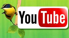 caluga_youtube